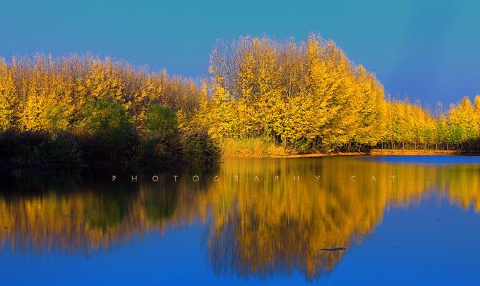 万亩速生林_风景图片_中国滕州微山湖湿地红荷风景区