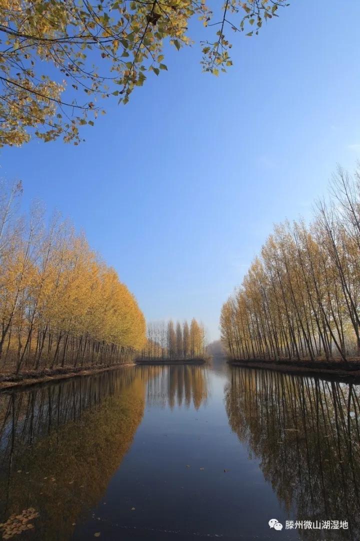 风景区内有盘龙岛,小李庄,水生植物园,湿地漂流园,荷花精品园,湿地